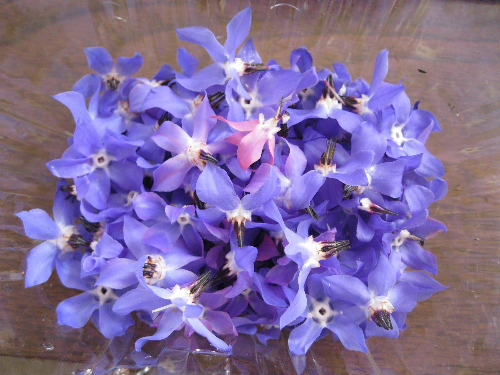 Clair Cooks Edible Flowers Borage