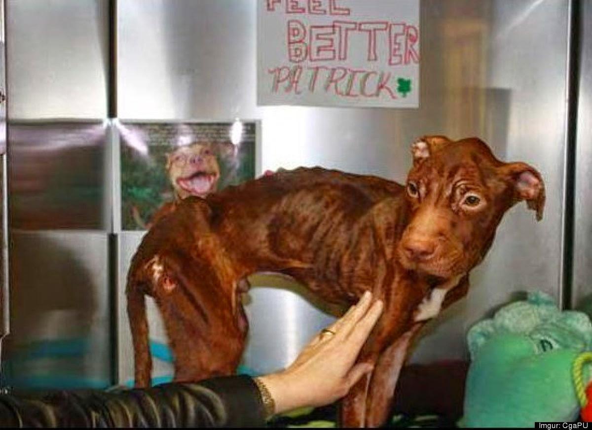 este perro fue abandonado