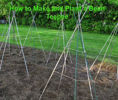 How to Make and Plant a Bean Teepee