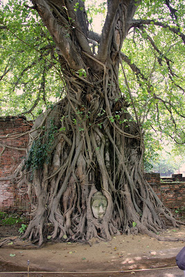 Testa di Buddha in Ayutthaya Wat Maha That