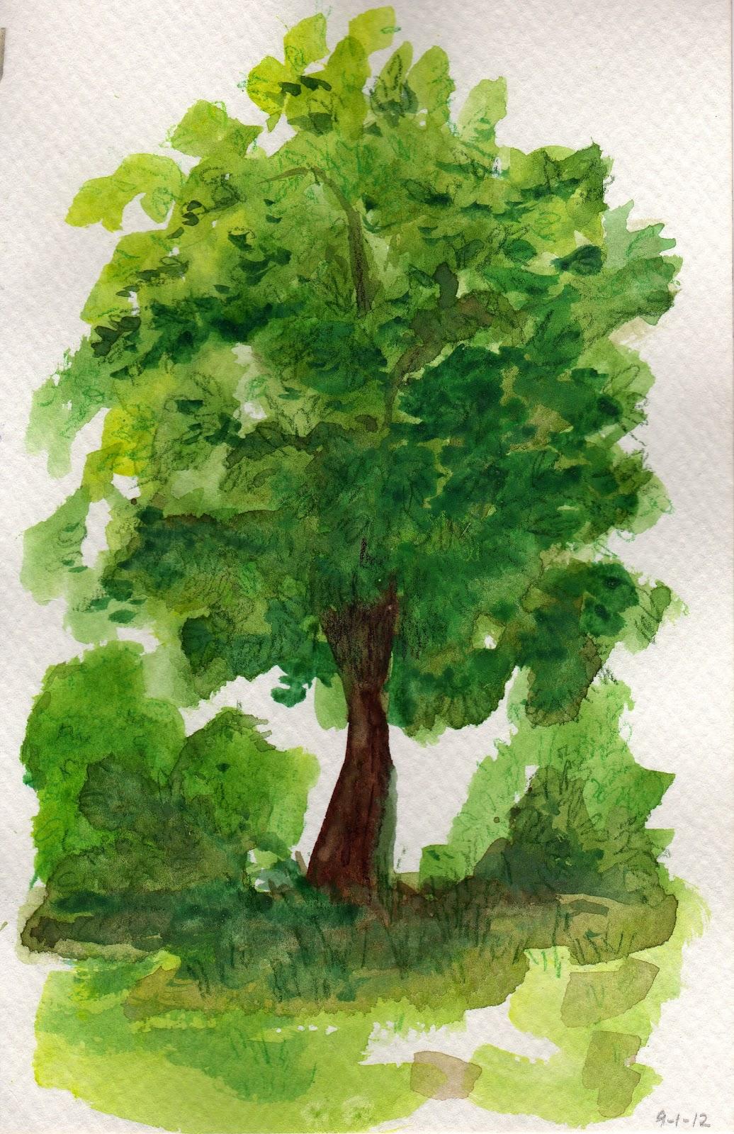 my daily tree
