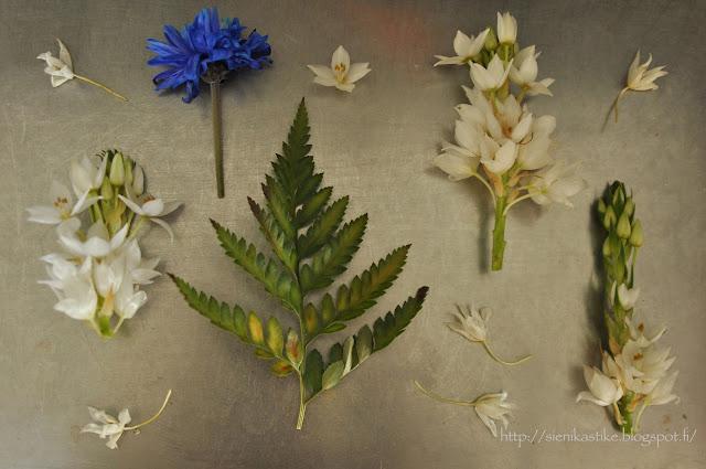 flowers and leafs, kukat, kukkia, lehdet, lehtejä