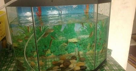 Kebaikan Membela Ikan Dalam Rumah Aziazidah Blogspot Com