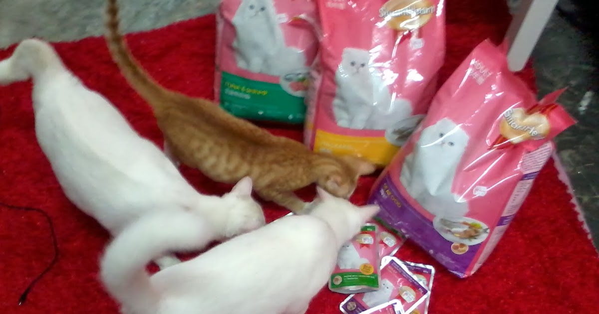 Bluesmammabulus Resepi Wet Food Untuk Kucing