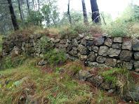 Antics murs de pedra seca dins el bosc de Pla de Gàver