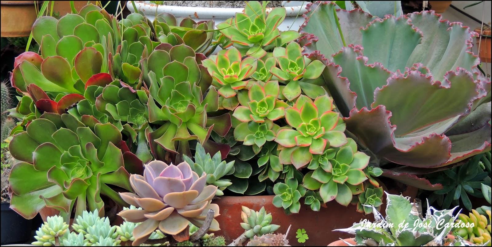 plantas de jardim que gostam de umidade : plantas de jardim que gostam de umidade:Jardim de Josi Cardoso: Cuidados com as Suculentas.