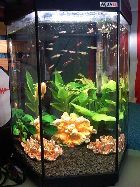 Los peces de fabian bienvenida pecera hexagonal for Pescados para acuario