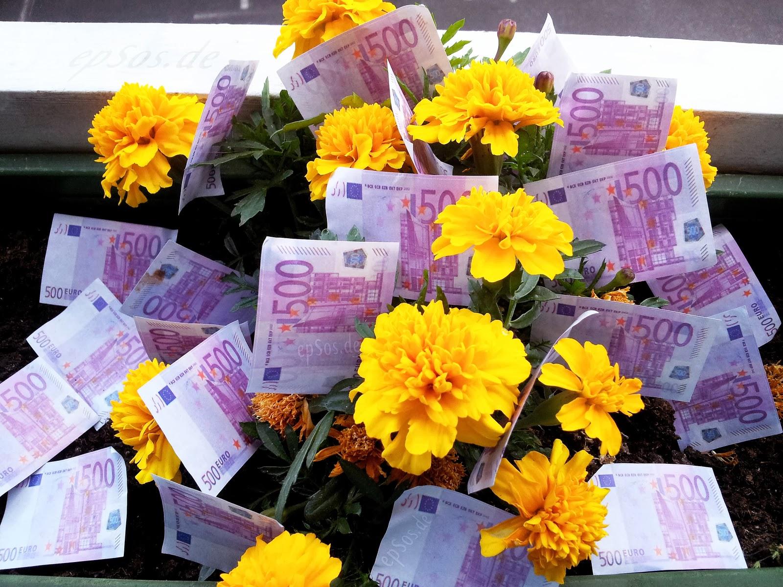 Euros Flowers Money Plant