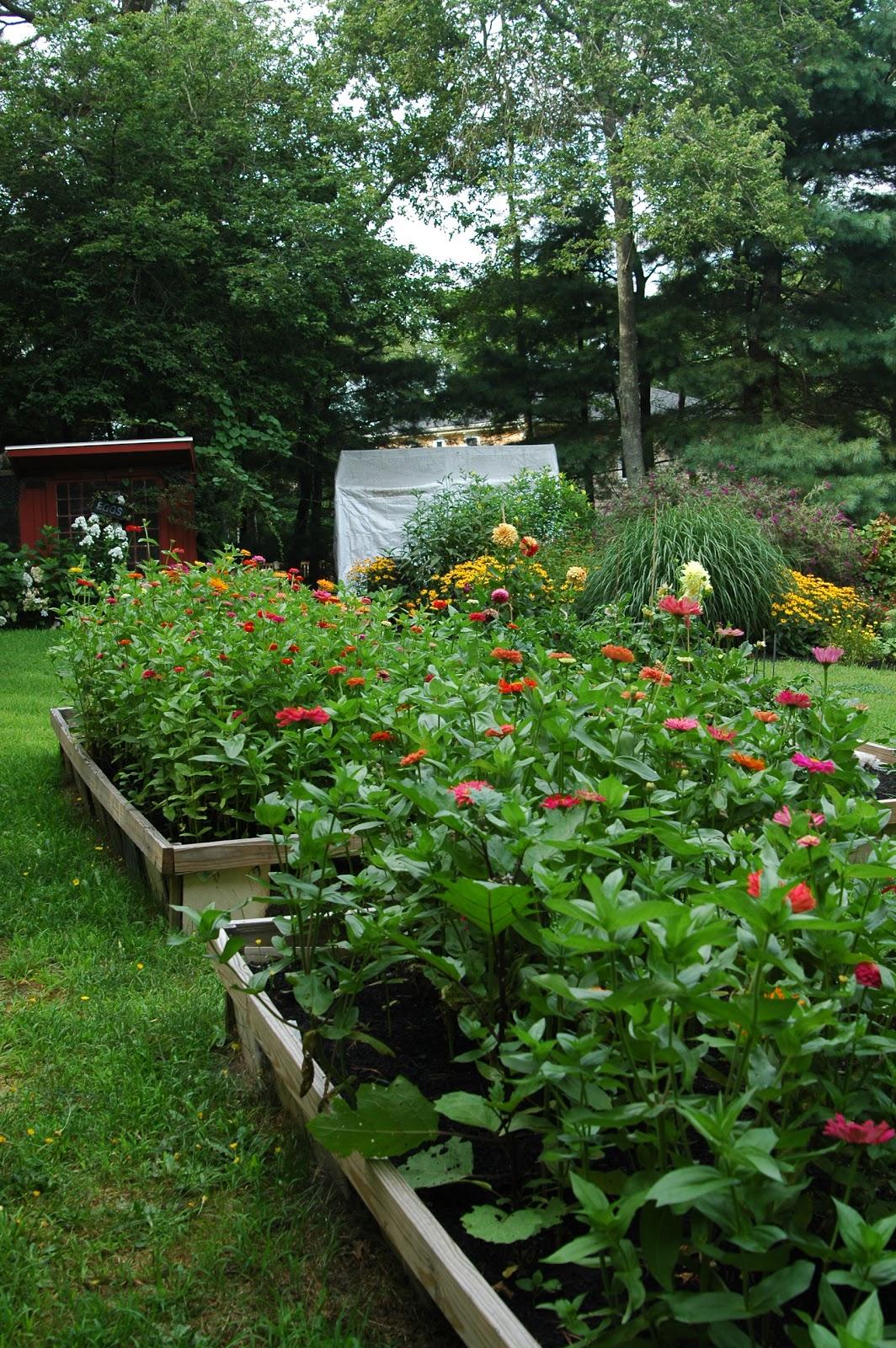 Backyard Flower Farmer :  HOUSE and GARDEN  3 Easy Annuals Every NEW Flower Farmer Can Grow