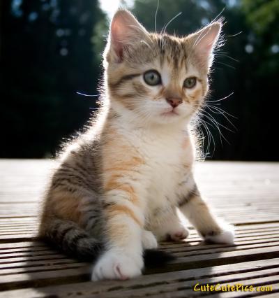 Cute Pussy Cat 20