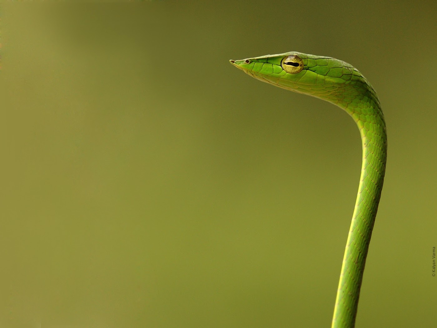 Wallpapers Tagged With SNAKE SNAKE HD Wallpapers Page