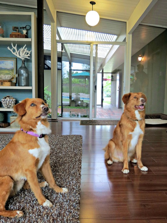 8 design ideas for dog friendly living australian dog lover for Dog friendly flooring ideas
