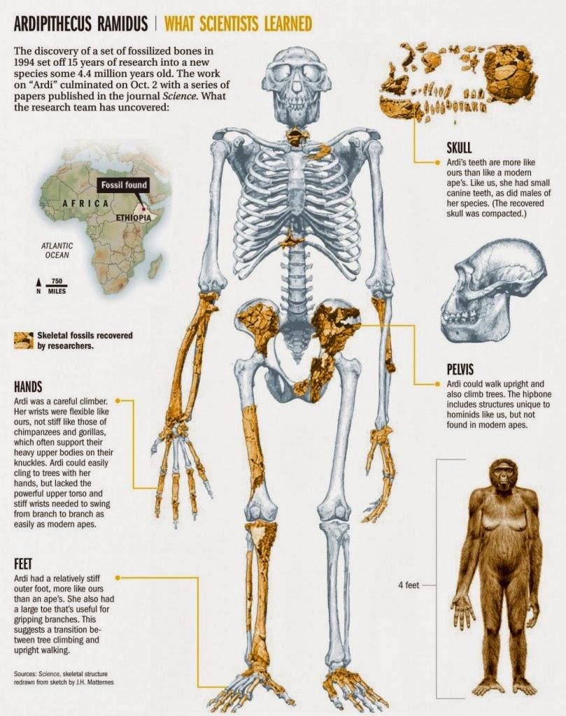 B.log.ia 2.0: La historia evolutiva del hombre