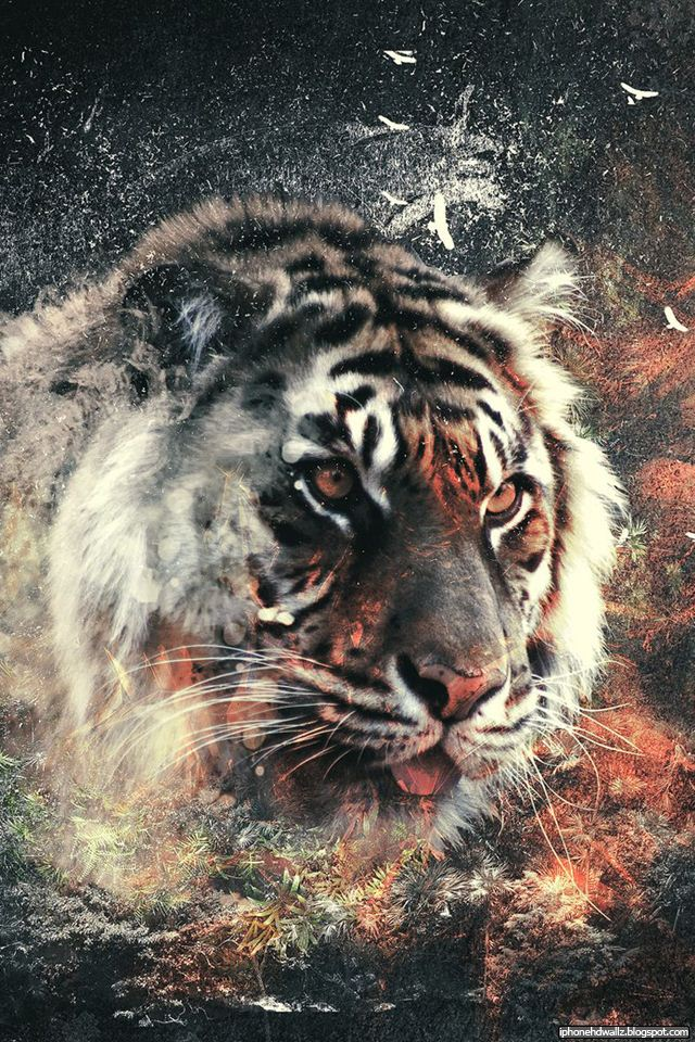 hd wallpaper tiger. Info : Abstract Tiger Cool