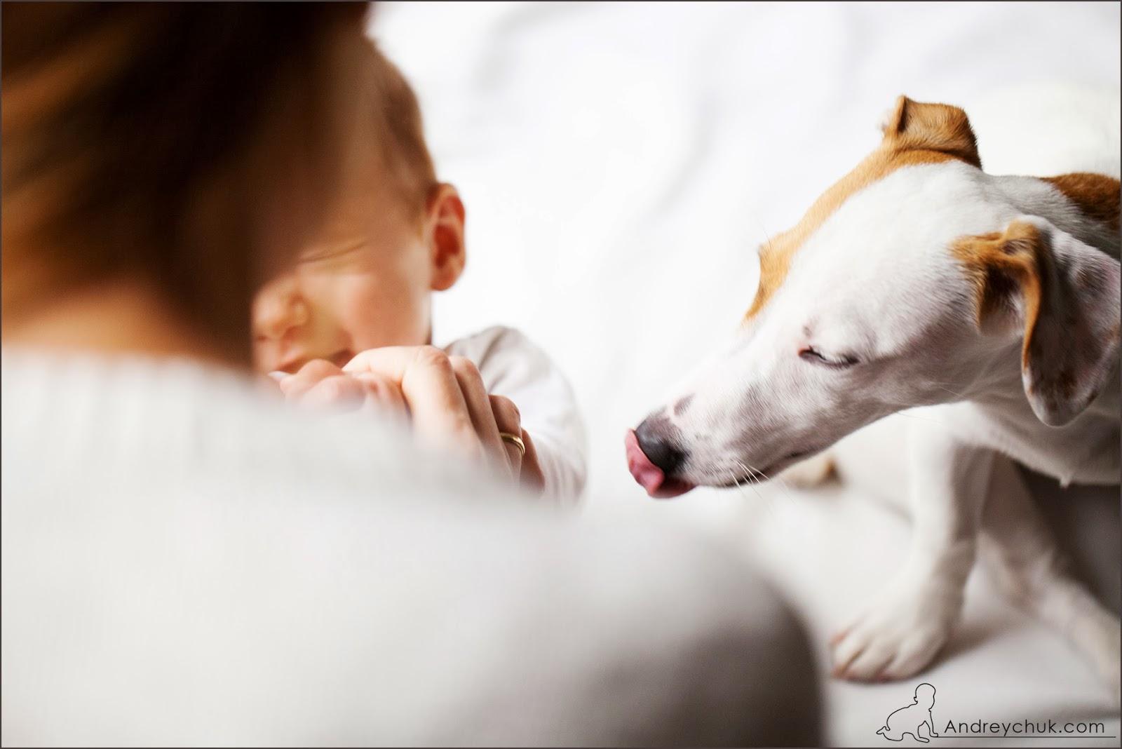 дети, мама, собака