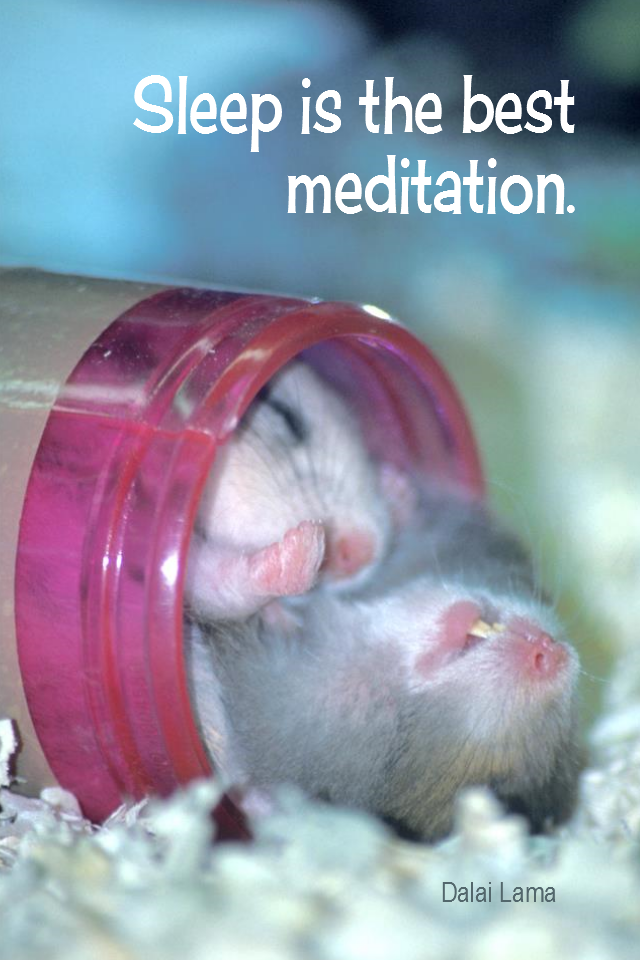 visual quote - image quotation for SLEEP - Sleep is the best meditation. - Dalai Lama