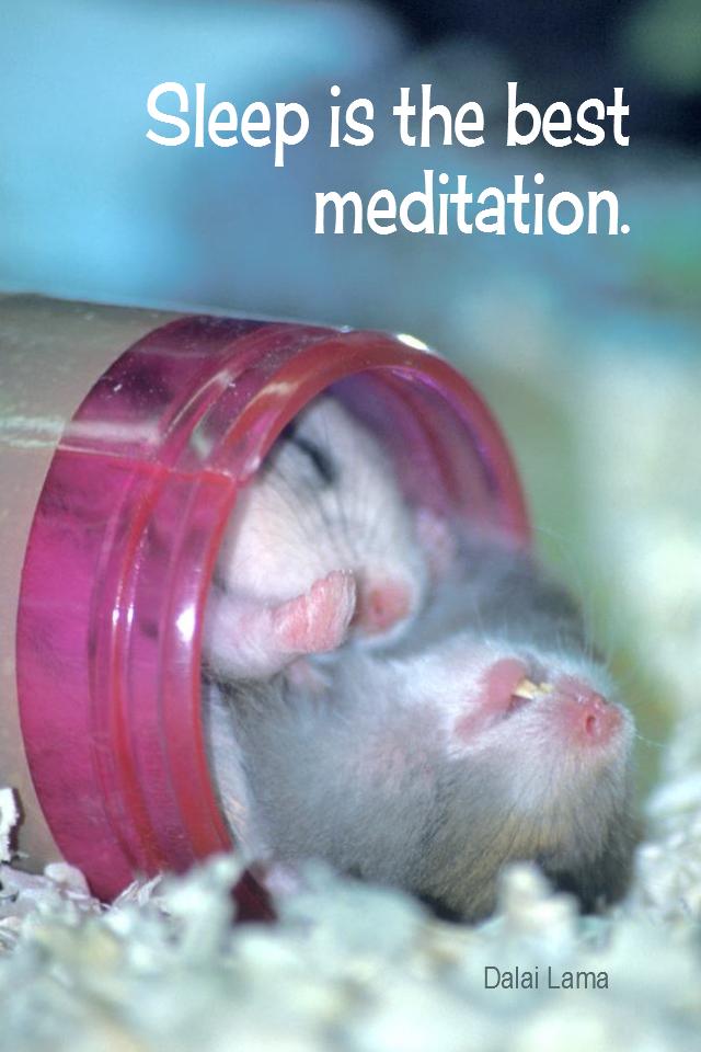 visual quote - image quotation for SLEEP - Sleep is the best meditation. - Dalai Lama