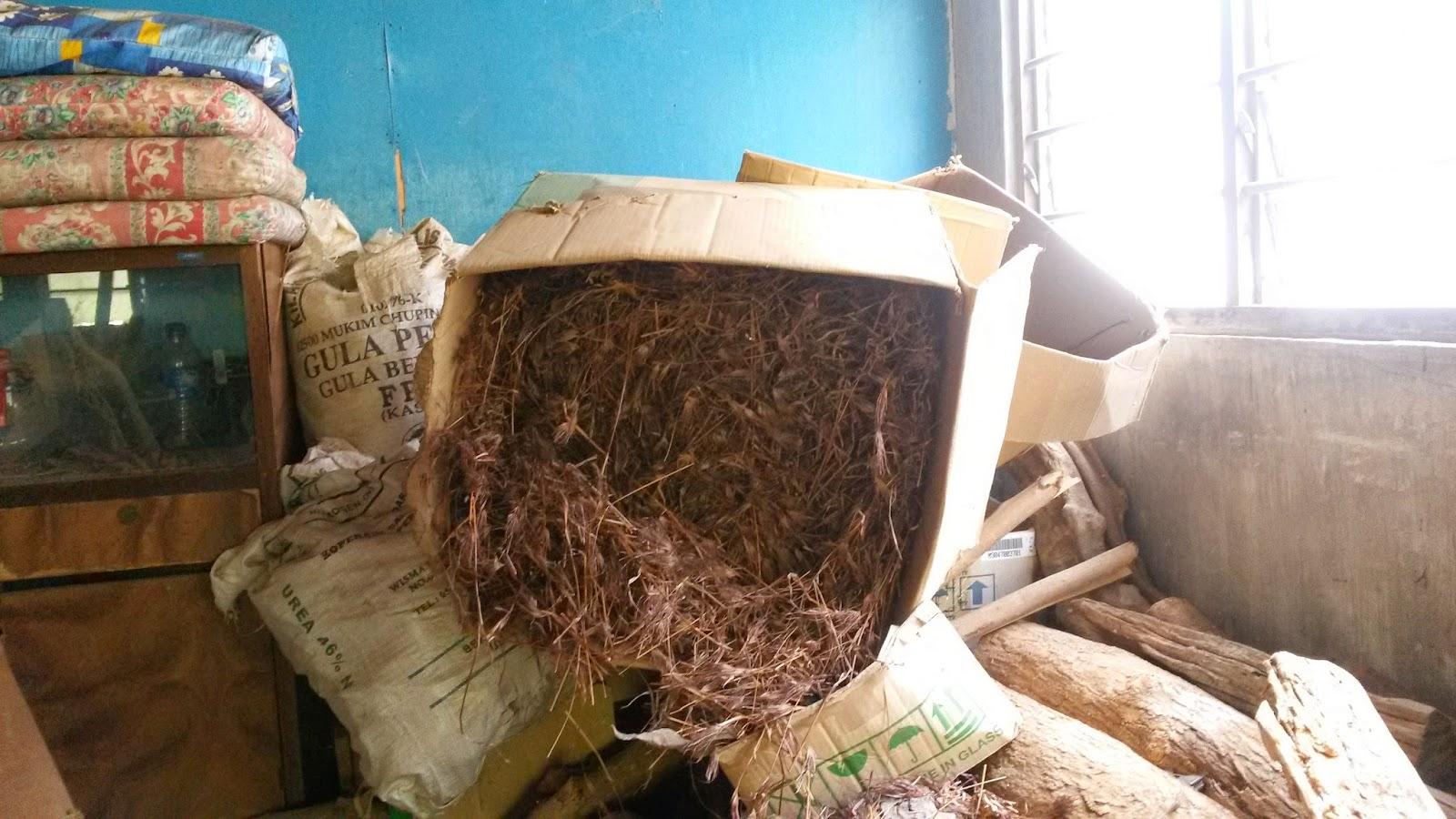 Rumah Herba & Akar kayu, resdung, tradisional medicine, janggut tok adam