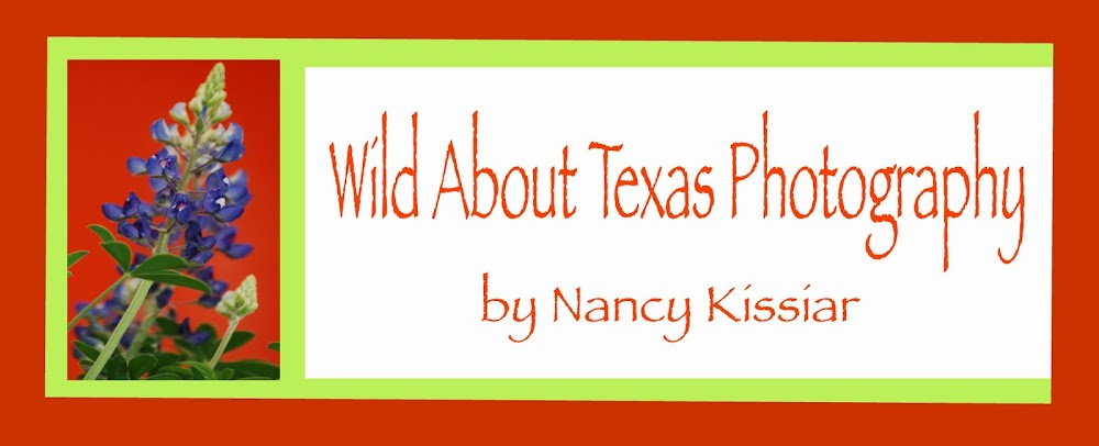 Wild About Texas
