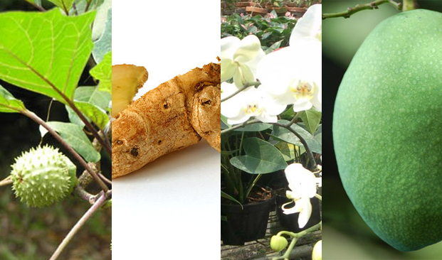 hortikultura berasal gabungan 2 kata, yakni hortus yang artinya kebun dan culture yang artinya bercocok tanam