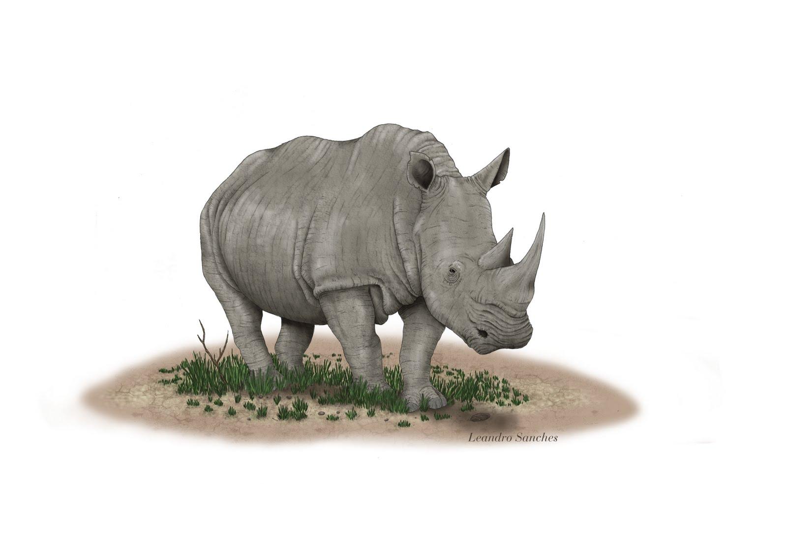 http://3.bp.blogspot.com/-RAMSHLtNBjs/ThfOAvyJNmI/AAAAAAAAARg/1wFMgDrCVR4/s1600/rinoceronte.jpg