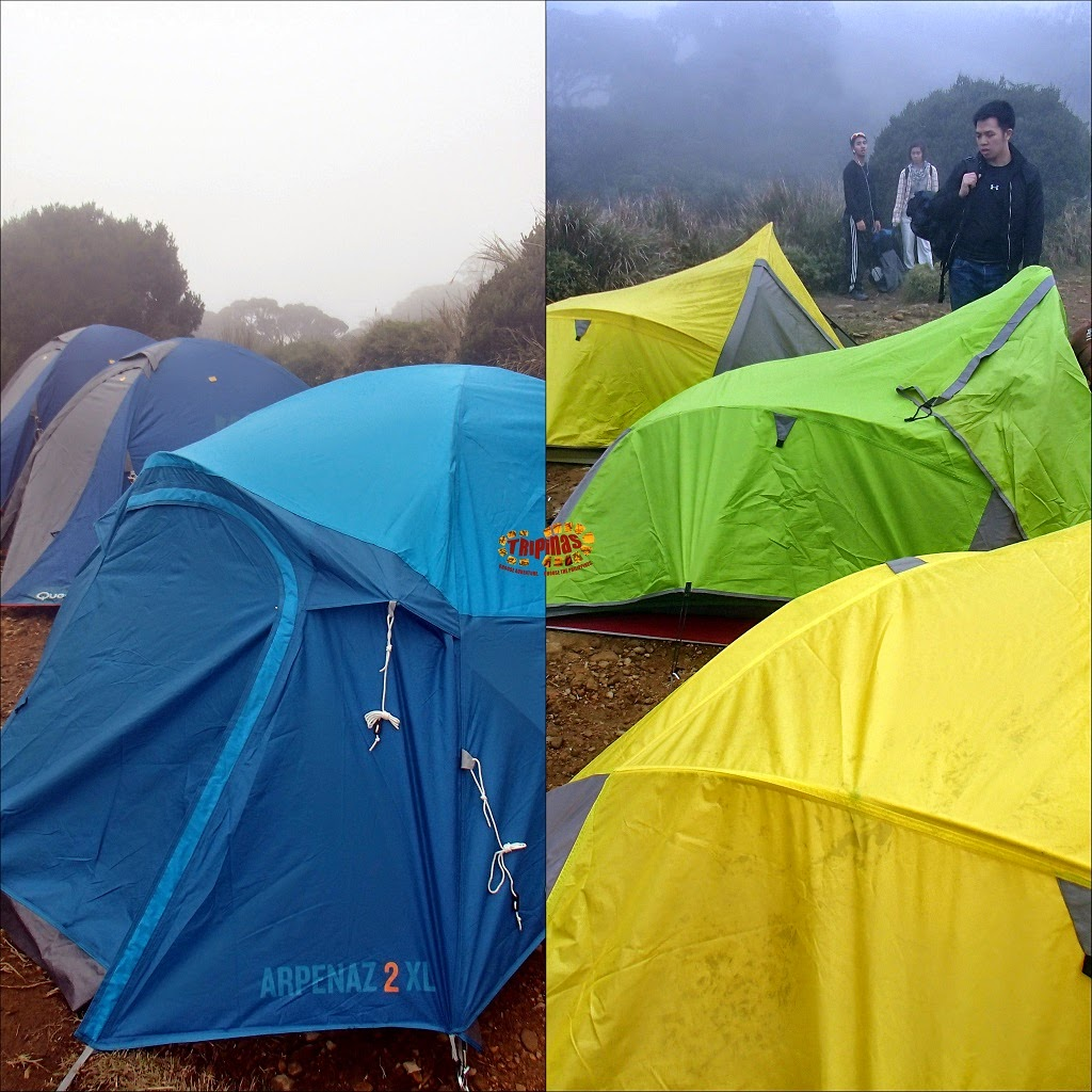 which tent for Mt. Pulag?