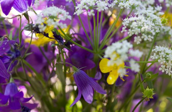 PauMau blogi nelkytplusbloggari nelkytplus asetelma kaunis kukka-asetelma niittykukat kesäinen kukkakimppu luonnonkukkakimppu violetti harakankello niittyleinikki valkoinen kukka morsiuskimppu