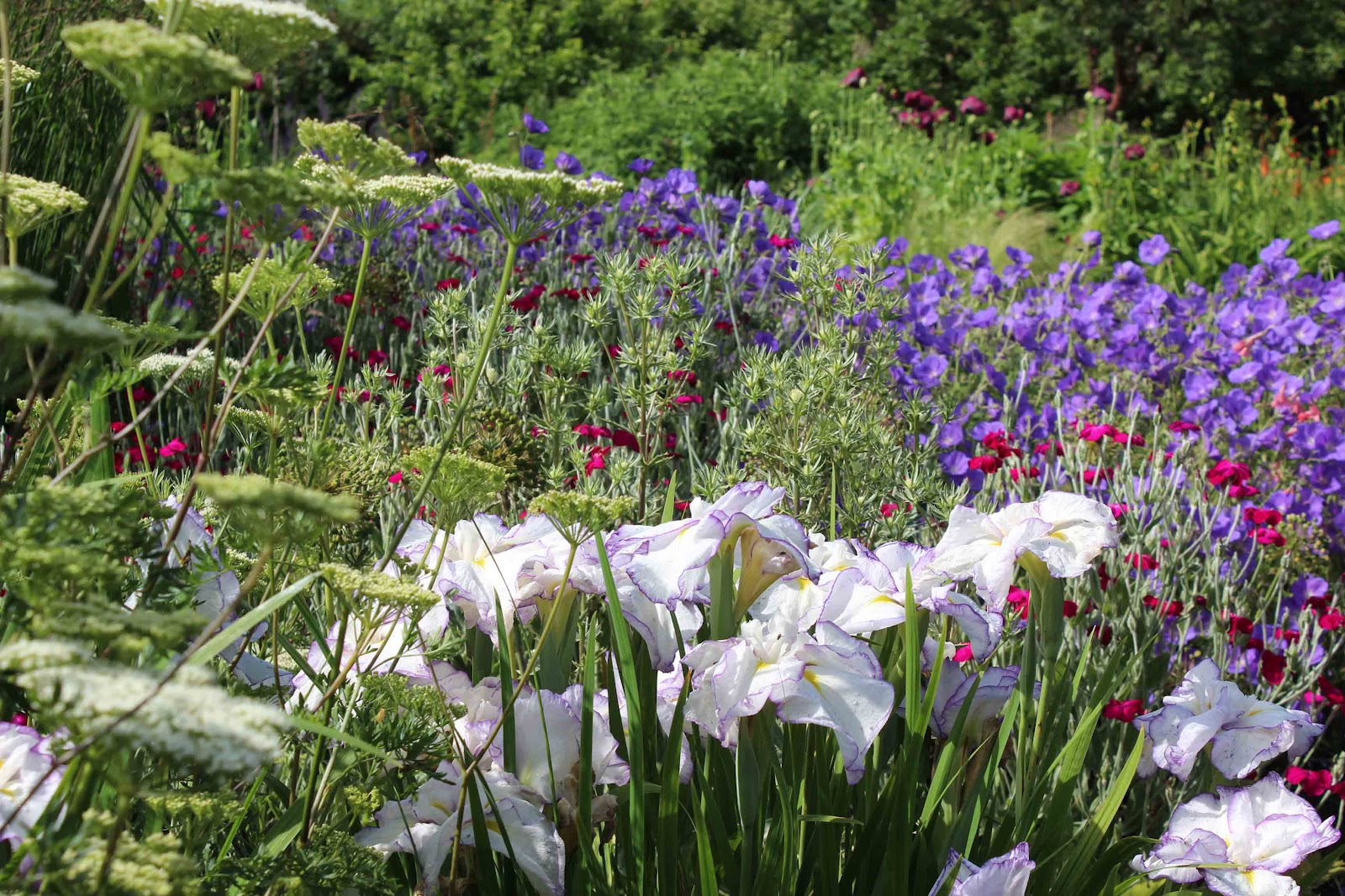 Right after rearranging the garden - Almost A Blog About Hampton Court Flower Show Bluebell
