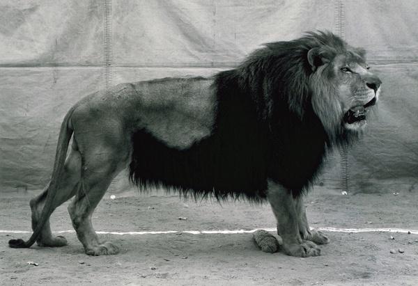 regarde et passe hic sunt leones. Black Bedroom Furniture Sets. Home Design Ideas