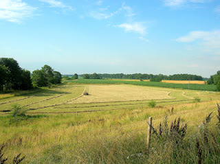 raked hayfield