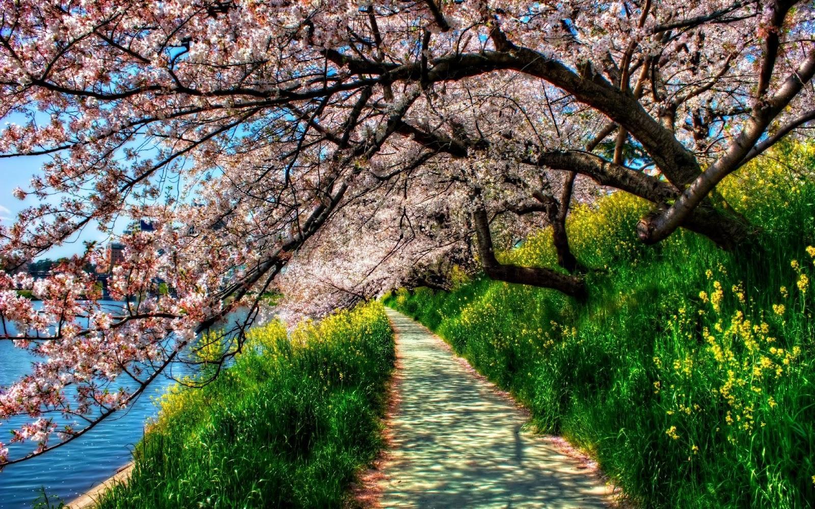 Wallpaper paisajes naturales gratis for Photo hd gratuite