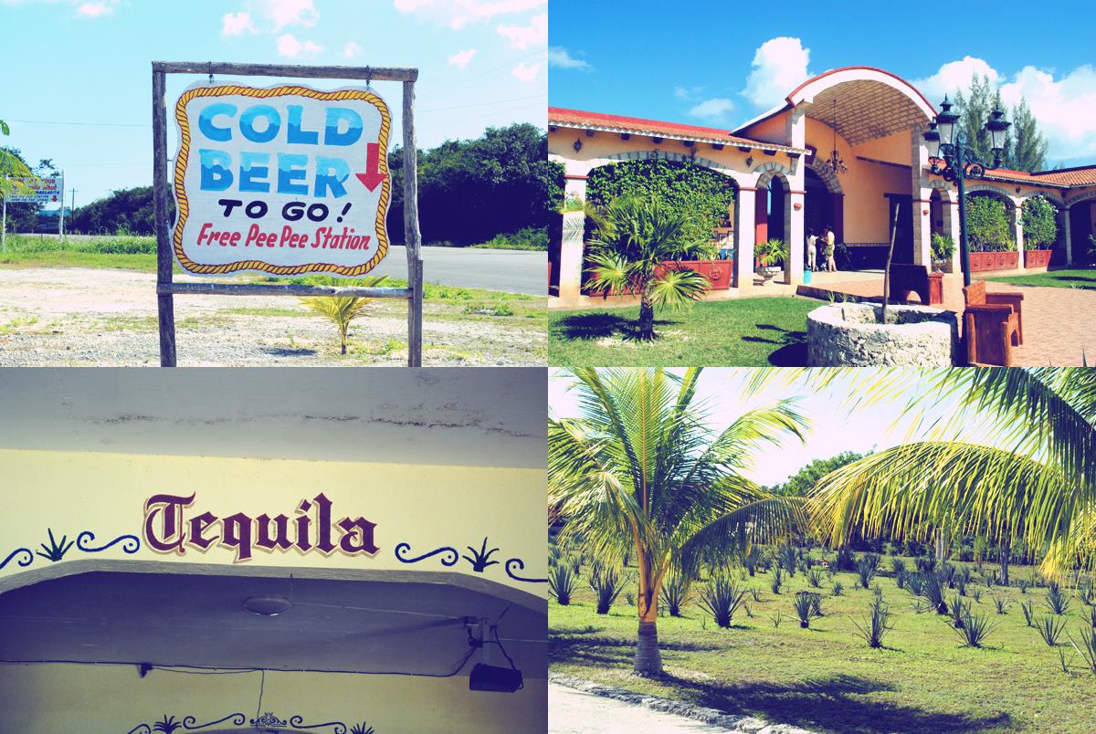 Cozumel Tour Tequila
