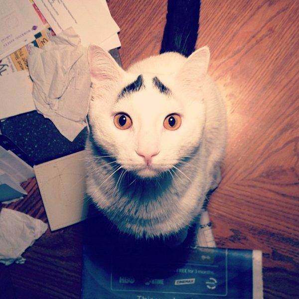 Sam the cat with eyebrows, funny cats, cat with eyebrows pictures, cat photos