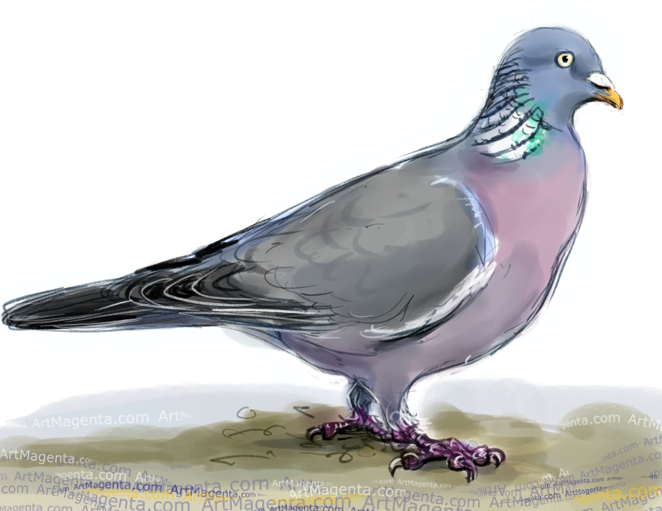 Wood Pigeon  sketch painting. Bird art drawing by illustrator Artmagenta