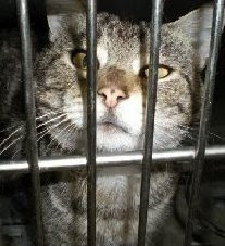 Licking Cty OH  change in policy at the pound - cats will now just be held 60 days (if healthy),