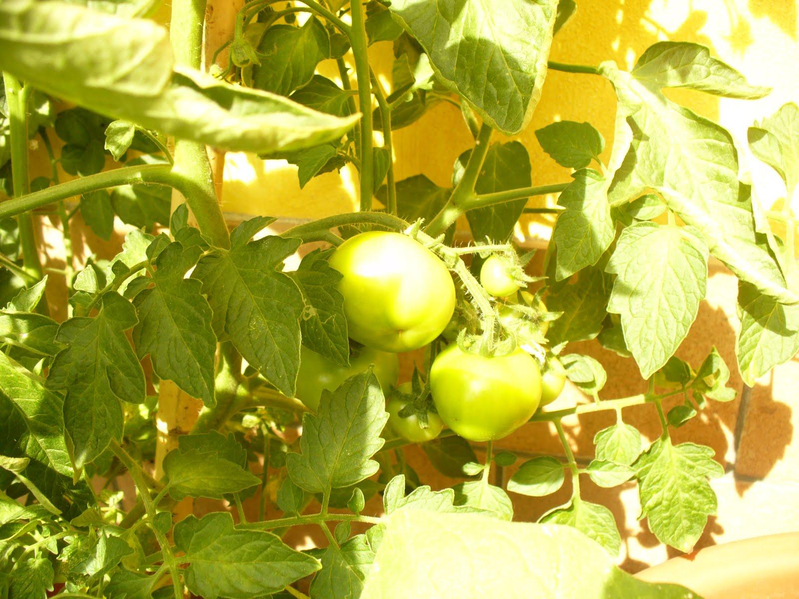 Il piccolo mondo di wonder perlina pomodori verdi fritti for Divano wonder