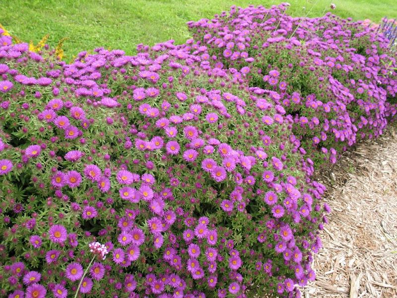 Il giardino sfumato colore nel giardino d 39 autunno - Fiori da giardino autunnali ...