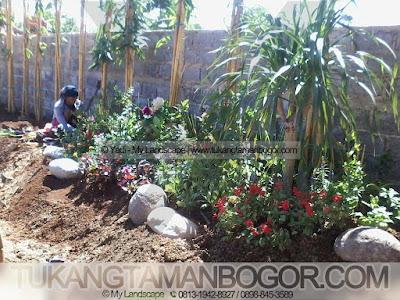 Tukang Taman Cibinong Murah Dan Profesional - Proses Penanaman Bambu Panda Taman Villa Minimalis
