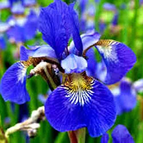 Birth Month Flowers Symbols