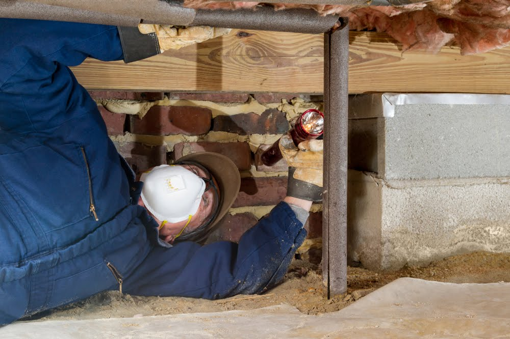 How a Building Pest Inspection Secures Your Property Purchase!
