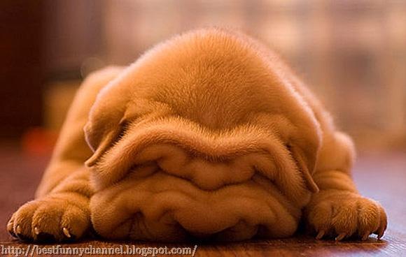 Funny sleeping dog.