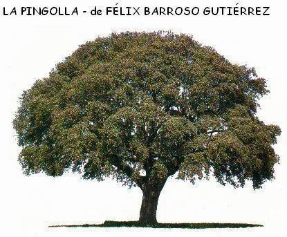 LA PINGOLLA - de FÉLIX BARROSO GUTIÉRREZ
