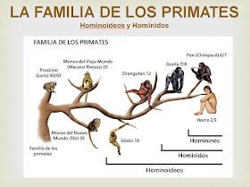 Taller de historia de la Casa Vecinal de Tetuán. Prehistoria. 05 La familia de los primates (I)