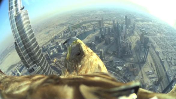 Águila toma vuelo desde la parte superior del edificio más alto del mundo