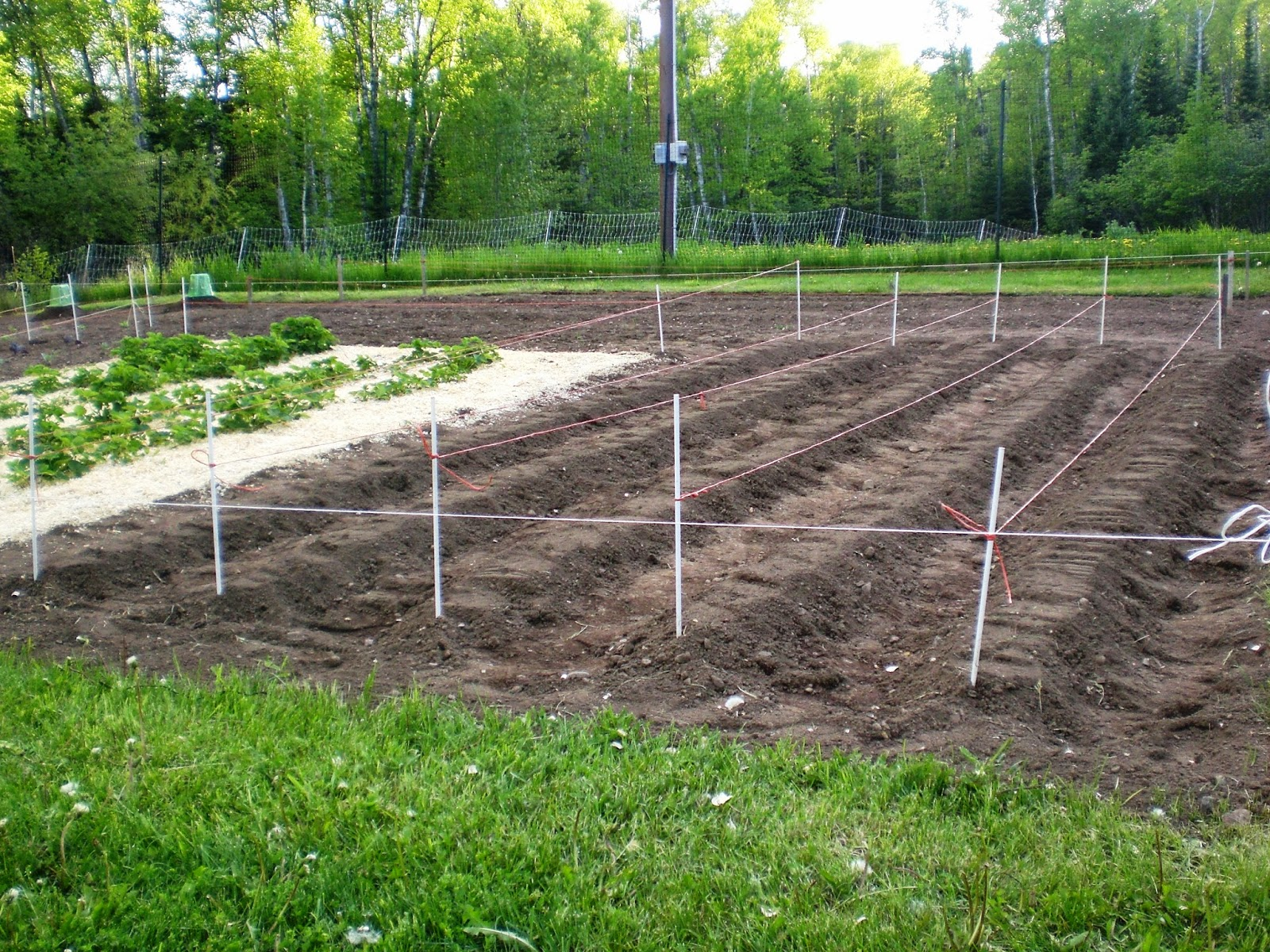 a home grown journal: more planting, getting close to done