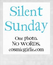 Silent Sunday Logo. One photo no words