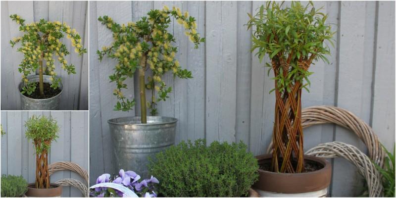 pil i haven