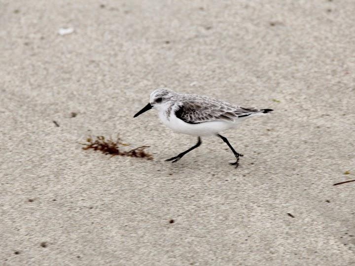 Shore Birds Photography