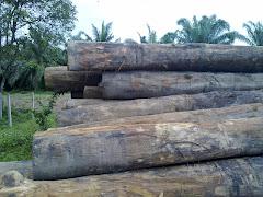 Hasil hutan