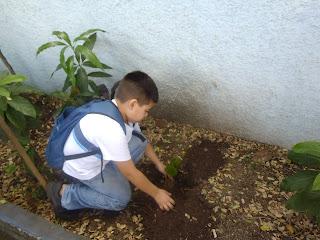 Plantando uma árvore nativa brasileira...